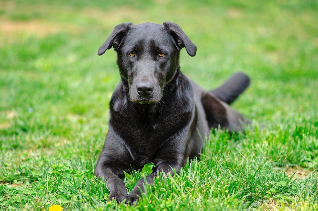 Leczenie padaczki u psa
